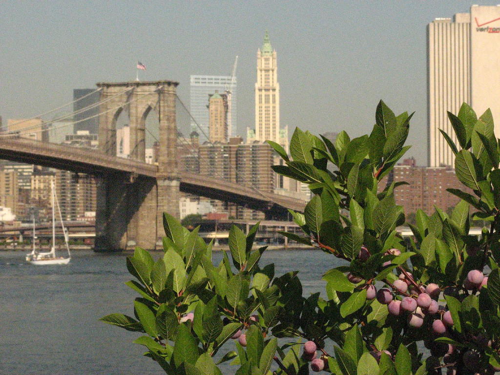 Brooklyn Bridge & Berries
