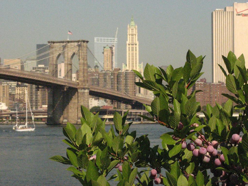 Brooklyn Bridge & Berries
